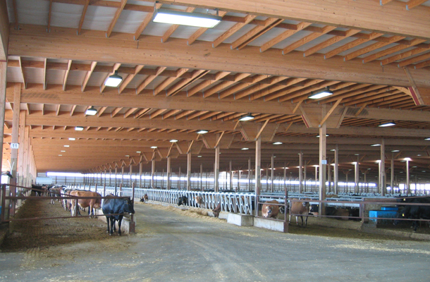 Morris Mn Dairy Freestall Building Lester Buildings