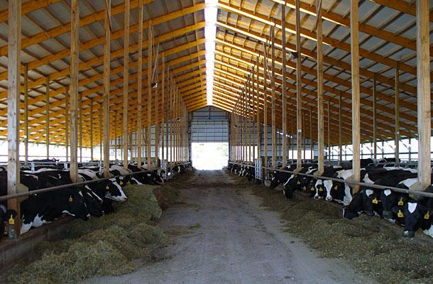 West Branch Mi Dairy Freestall Building Lester